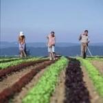 Aproape-3-000-de-tineri-s-au-facut-fermieri-cu-bani-de-la-UE