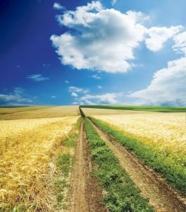 Lista completa a platilor directe de care beneficiaza agricultorii
