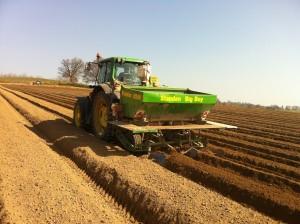 Promisiuni de subventii pentru cultivatorii de cartofi