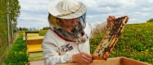 apicultura-slide-4