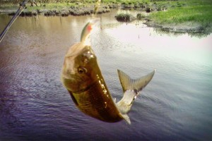 pescuit (1)