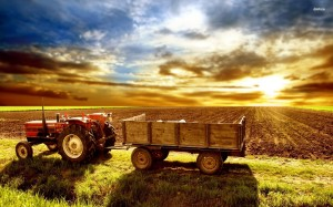 Poze-agricultura
