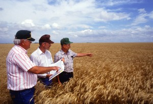 farmers-in-wheat-field_01670