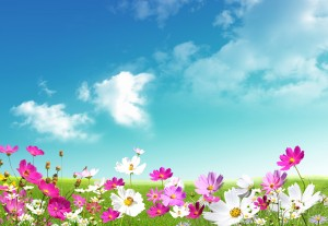 free_desktop_HD_wallpaper_spring