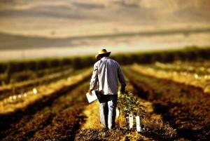 facilitati fiscale agric