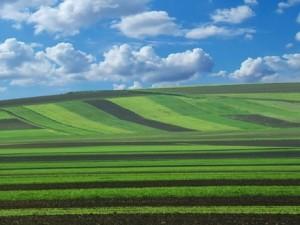 teren-cultivat