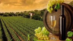 viticultura1_0