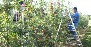 Pomicultura_ST