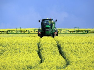 12-Oilseed-Rape-Harvest-Get