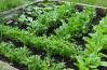 Sprijin-minimis-pentru-agricultura-ecologica1