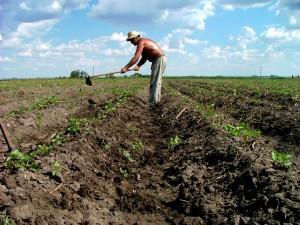 agricultura-taran-teren-agricol-sapa