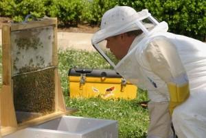 apicultor-CA