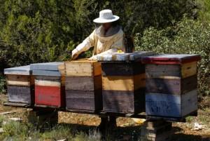 apicultorii-pregatesc-albinele-pentru-iernat