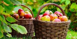 fructe-in-scoli-640x330