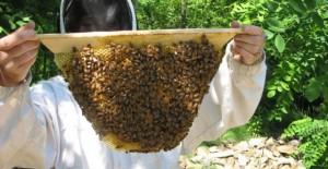 legea-apiculturii-640x330