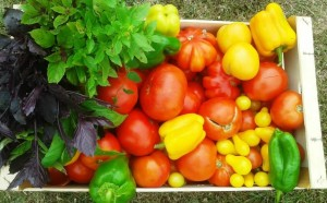 solarii-robert-popescu-legume3