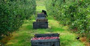 fonduri-europene-nerambursabile-pomicultura