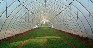 solare-agricole-profesionale-640x330