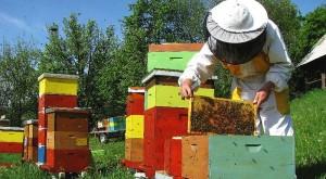 apiary-Medokost