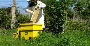 apicultura1-640x330