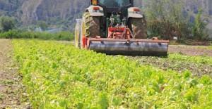 cooperativa-agricola-640x330