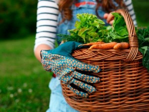 legume-organice