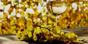 vin-feteasca-regala (1)