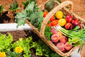 33276665-Basket-of-fresh-organic-fruit-and-vegetables-in-garden-Stock-Photo