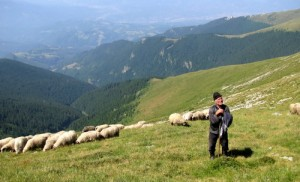 poza cu turma de oi